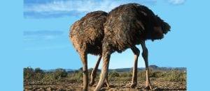 ostriches-stick-heads-sand_f6014aa539bbc417wide